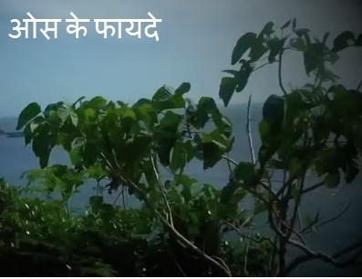 hindi health.jpg