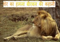 akbar story hindi.jpg